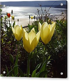 More Tulips At The #seaside Acrylic Print by Dante Harker