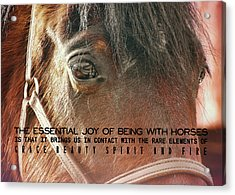 Morgan Horse Quote Acrylic Print by JAMART Photography