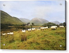 Morning At Kilchurn Acrylic Print by Roy  McPeak