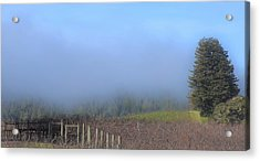 Morning At The Vinyard Acrylic Print
