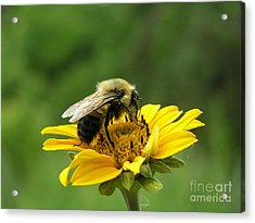 Morning Bee Acrylic Print