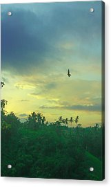 Morning Acrylic Print by Caroline Benson