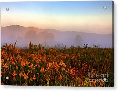 Morning Color-7 Acrylic Print by Robert Pearson