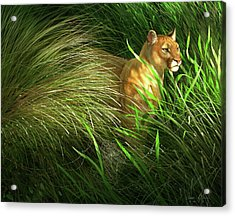 Morning Dew - Florida Panther Acrylic Print by Aaron Blaise