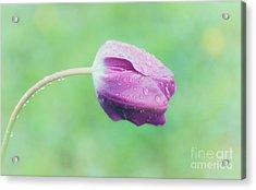 Morning Dew Acrylic Print by Janet Burdon