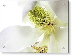 Acrylic Print featuring the photograph Morning Dew Magnolia by JC Findley