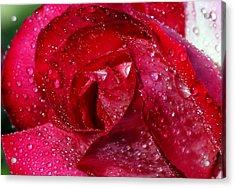 Morning Dew On Rose Acrylic Print