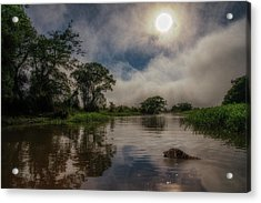 Acrylic Print featuring the photograph Morning Dip by Wade Aiken