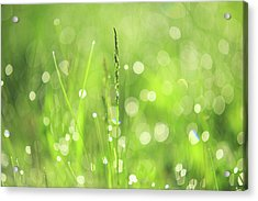 Morning Fairies. Green World Acrylic Print by Jenny Rainbow
