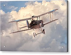 Morning Flight - Se5a Acrylic Print by David Collins