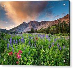 Morning Flowers In Little Cottonwood Canyon, Utah Acrylic Print