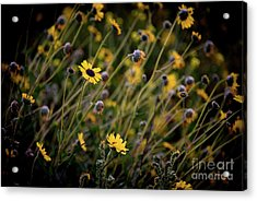Acrylic Print featuring the photograph Morning Flowers by Kelly Wade