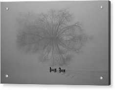 Morning Fog Acrylic Print by Jill Smith