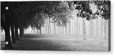 Morning Fog Acrylic Print by Matteo Chiarello