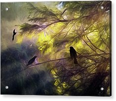 Morning Forest Light Acrylic Print