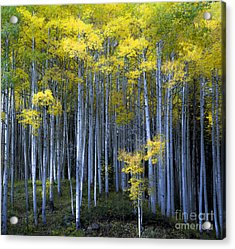 Acrylic Print featuring the photograph Morning Forest by The Forests Edge Photography - Diane Sandoval