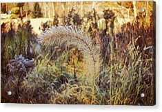 Morning Frost Acrylic Print by JAMART Photography