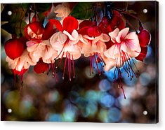Morning Fuchsia Acrylic Print