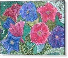 Morning Glories Acrylic Print by Hillary McAllister