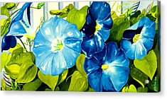 Morning Glories In Blue Acrylic Print by Janis Grau