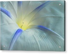 Morning Glory Acrylic Print by Gene Sizemore