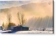 Morning Glory Acrylic Print by John Poon