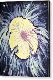 Morning Glory Acrylic Print by Laura Lillo