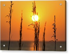 Morning Glow Acrylic Print by AM Photography