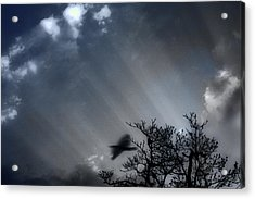 Acrylic Print featuring the photograph Morning  by Gray  Artus