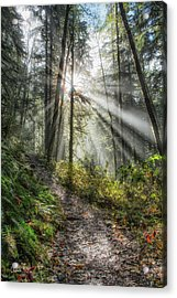 Morning Hike Acrylic Print