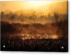Morning Impression Acrylic Print by Przemyslaw Wielicki
