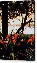 Morning In Florida Acrylic Print