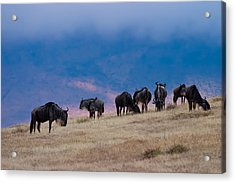 Morning In Ngorongoro Crater Acrylic Print by Adam Romanowicz