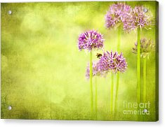Morning In The Garden Acrylic Print