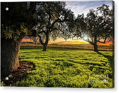 Morning In Wine Country Acrylic Print