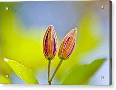 Morning Joy Acrylic Print by Az Jackson