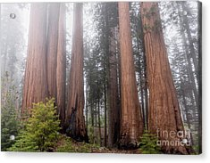 Acrylic Print featuring the photograph Morning Light In The Forest by Peggy Hughes