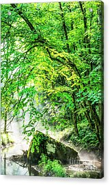 Morning Light In The Forest Acrylic Print