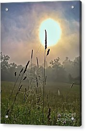 Morning Light Acrylic Print