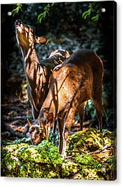 Acrylic Print featuring the photograph Morning Light Of Dawn by Karen Wiles