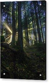 Morning Light Rays Acrylic Print