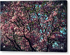 Morning Lit Magnolia Acrylic Print