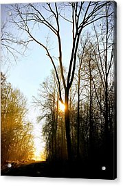 Morning Mood In The Forest Acrylic Print