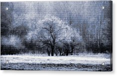 Morning Mood Acrylic Print by Mimulux patricia no No