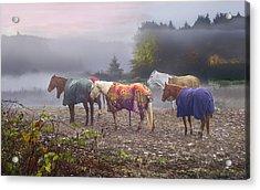 Morning Mudders Acrylic Print