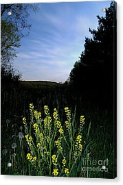 Morning Musturd Acrylic Print by The Stone Age