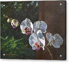 Morning Phaleanopsis Acrylic Print