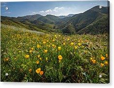Morning Poppy Hillside Acrylic Print