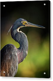 Morning Portrait Acrylic Print
