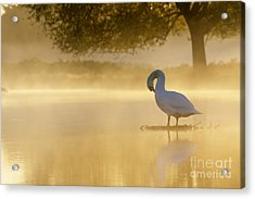 Morning Preen Acrylic Print